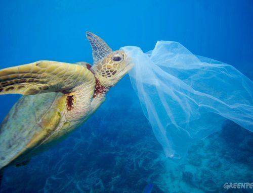 Plastika je prijetnja okoliš i opstanku mnogih životinjskih vrsta